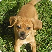 Adopt A Pet :: Jelly - Alpharetta, GA