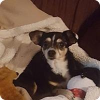 Adopt A Pet :: Julia - Mesa, AZ