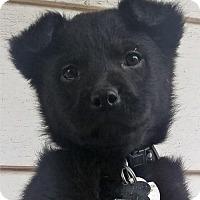 Adopt A Pet :: Etta - Bloomington, IL