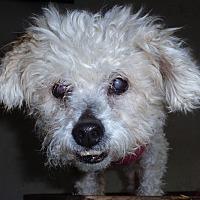 Adopt A Pet :: Ms. Gretel - San Diego/Imperial Beach, CA