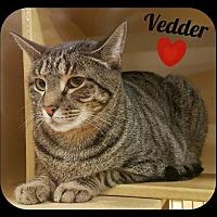 Adopt A Pet :: Vedder (LB) 9.22.14 - Orlando, FL