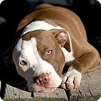 Adopt A Pet :: Georgina - Houston, TX