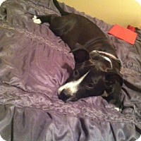 Adopt A Pet :: Jefferey (courtesy listing) - Scottsdale, AZ