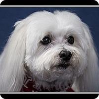 Adopt A Pet :: Jackson - Fort Braff, CA