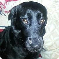 Adopt A Pet :: Beulah - Westpark, OH