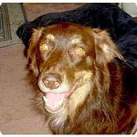 Adopt A Pet :: Ezy - Orlando, FL