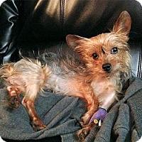 Adopt A Pet :: Muschu - Miami, FL