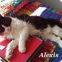 Adopt A Pet :: Alexis - Bentonville, AR