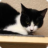 Adopt A Pet :: Blackchin - Gilbert, AZ