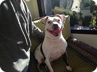 American Bulldog Mix Dog for adoption in Gainesville, Georgia - louie