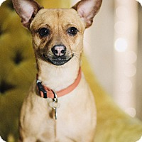 Adopt A Pet :: Baby Boy - Portland, OR