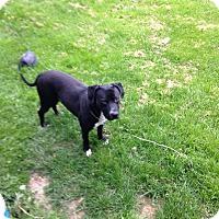 Adopt A Pet :: Mack - Olivet, MI