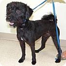 Adopt A Pet :: Tucker