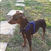 Adopt A Pet :: Hunter (SEE VIDEO) - McDonough, GA