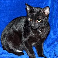 Adopt A Pet :: Speedo - Laingsburg, MI