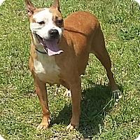 Adopt A Pet :: Zita - Carthage, NC