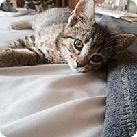 Adopt A Pet :: Sibbie - New York, NY