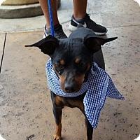Adopt A Pet :: Xavier - Las Vegas, NV