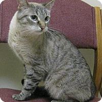 Adopt A Pet :: Lynn - Gary, IN