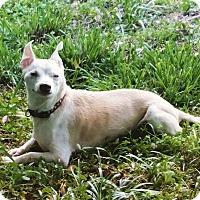 Adopt A Pet :: Arfur Miller - Andalusia, PA