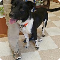 Adopt A Pet :: Nelson - Kingman, KS