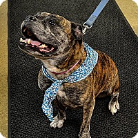 Adopt A Pet :: BELLA - Indiana, PA
