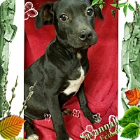 Adopt A Pet :: Savannah meet me 10/28 - Manchester, CT