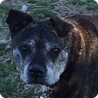 Adopt A Pet :: Ci Ci - Claremore, OK