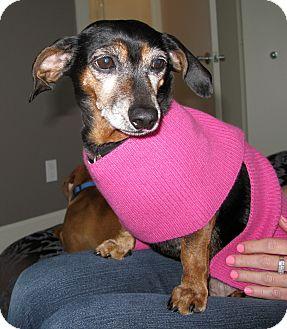 Dachshund Dog for adoption in Portland, Oregon - RUBY