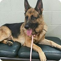 Adopt A Pet :: Rizzo - Hillside, IL