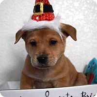 Adopt A Pet :: Charlie Brown (FORT COLLINS) - Fort Collins, CO