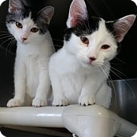 Adopt A Pet :: Thelme - Chippewa Falls, WI