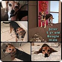 Adopt A Pet :: JETER - Overland Park, KS