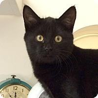 Adopt A Pet :: Marlin - Colorado Springs, CO