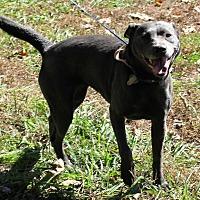 Adopt A Pet :: Bonnie - Colonial Heights, VA