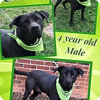Adopt A Pet :: CLETUS - Lexington, NC
