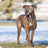 Adopt A Pet :: Brinny - Washoe Valley, NV