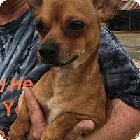 Adopt A Pet :: Todd - Centerville, GA