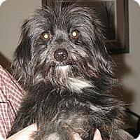 Adopt A Pet :: Ringo - Salem, NH