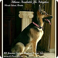 Adopt A Pet :: Athena - Green Cove Springs, FL