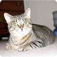 Adopt A Pet :: Windsor - Painesville, OH