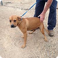 Adopt A Pet :: CANDY - Childress, TX