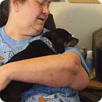 Adopt A Pet :: Cooper - Prole, IA