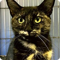 Adopt A Pet :: Alley - Medway, MA