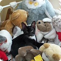 Adopt A Pet :: Elphie - Duluth, GA