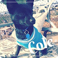 Adopt A Pet :: Cole - Lake Elsinore, CA