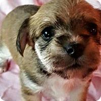 Adopt A Pet :: Penny pup3 - Charlie Tango - Houston, TX
