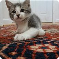 Adopt A Pet :: Bear - Raleigh, NC