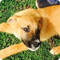 Adopt A Pet :: Ginger - Christiana, TN