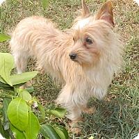 Adopt A Pet :: Titan - Umatilla, FL